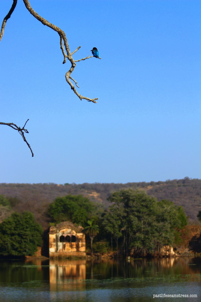 khem villas, ranthambore, ranthambore national park, jungle camp, luxury jungle camp, where to stay in ranthambore, best jungle camp, things to do in khem villas, things to do in ranthambore, ranthambore national park guide, khem villas review, ranthambore fort